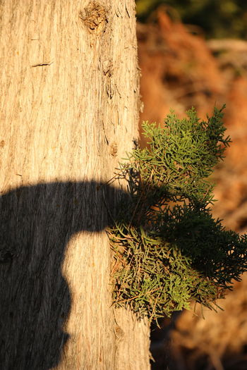Close-up of tree trunk on sunny day