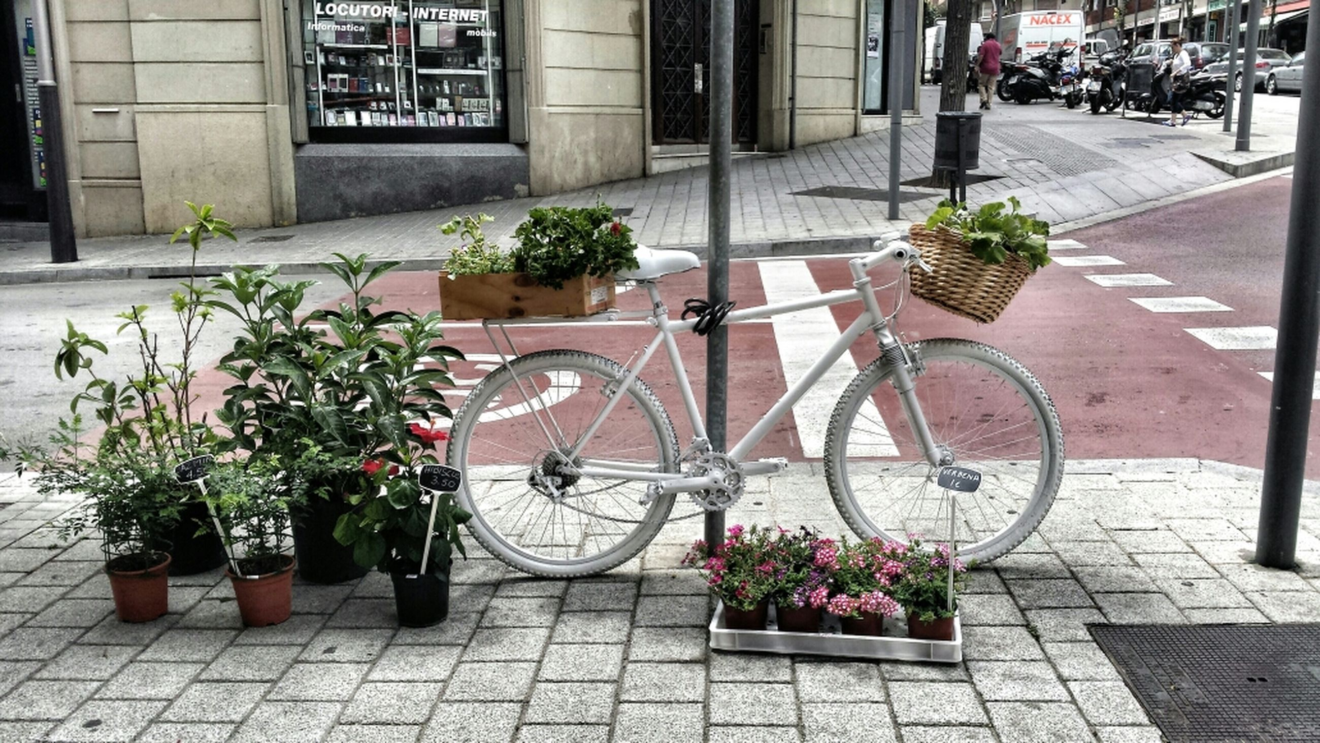 building exterior, architecture, built structure, potted plant, city, sidewalk, bicycle, plant, cobblestone, transportation, street, flower, paving stone, growth, outdoors, footpath, pavement, mode of transport, incidental people, day