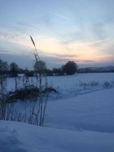 Cold Temperature Winter Nature Snow Tranquil Scene Tranquility Beauty In Nature