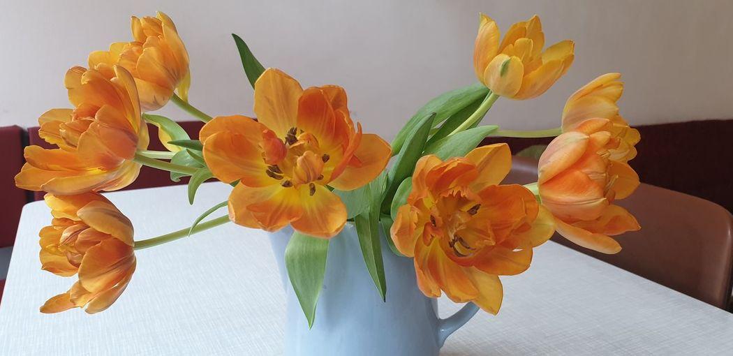tulips Flower Head Flower Multi Colored Bouquet Petal Close-up Plant Sky