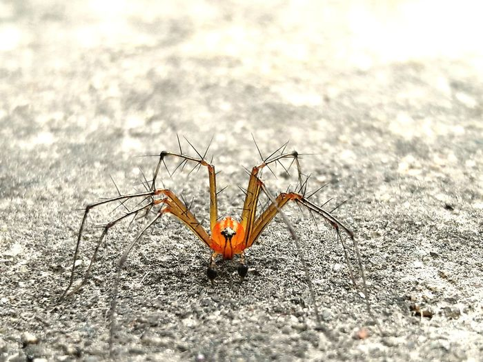 Many spider can be alive on earth but this is different with orange blast colour Spider Outdoors Butterfly - Insect Beauty In Nature Close-up Day first eyeem photo EyeEm Ready   EyeEmNewHere