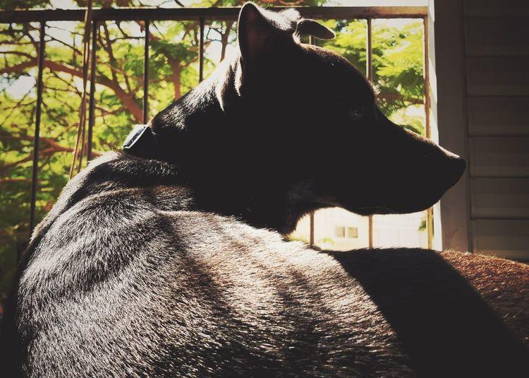 One Animal Domestic Animals Window Animal Themes No People Day Indoors  Close-up Dog Doggo Vintage