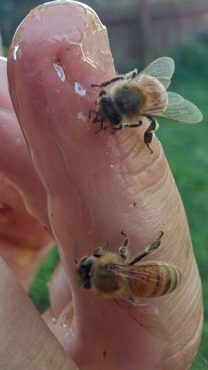 On finger 4 Insect Insect Theme Close-up Feeding  Nature Day Food Outdoors Perching Yves Bees🐝 Hallo Hanging Women Who Inspire You I See You Summer NZ Style