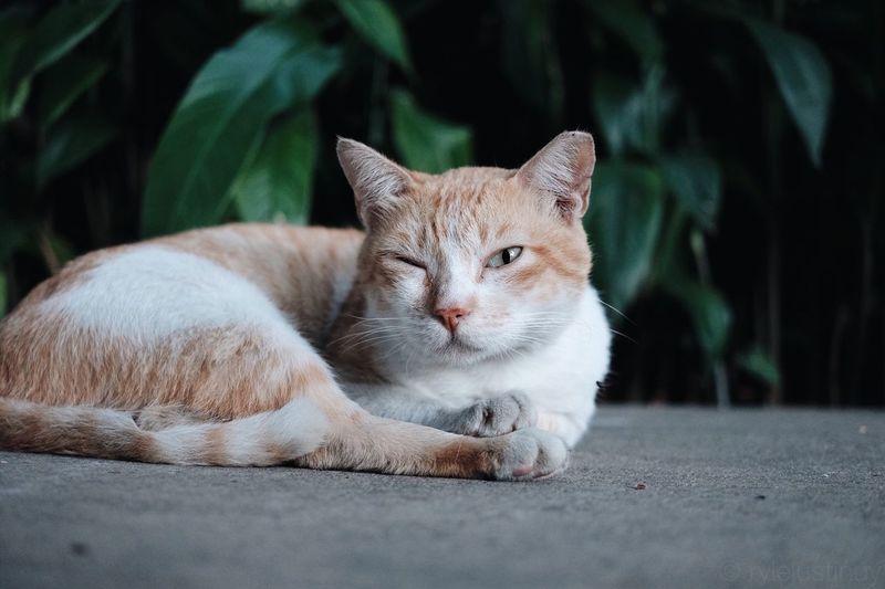 Winking cat Cat #cats #catsagram #catstagram #instagood #kitten #kitty #kittens #pet #pets #animal #animals #petstagram #petsagram #photooftheday #catsofinstagram #ilovemycat #instagramcats #nature #catoftheday #lovecats #furry #sleeping #lovekittens #adorable #catlo