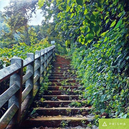 🍃📷 Steps Tree Tranquility Green Color The Way Forward Plant No People Famous Place Prisma Nature