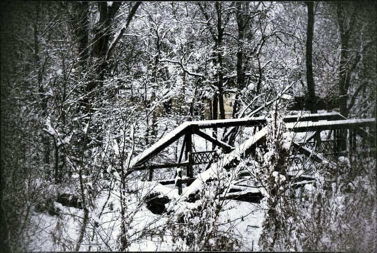 Bridge Winter Winter Trees bridge