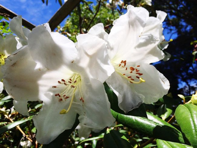 White Flower Flowers Plants And Flowers Flowers,Plants & Garden Flowers Are Blooming Botanical Gardens San Francisco Botanical Garden