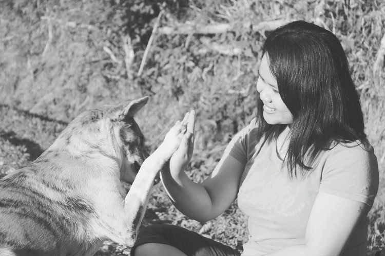 Dog Giving High-five To Smiling Woman