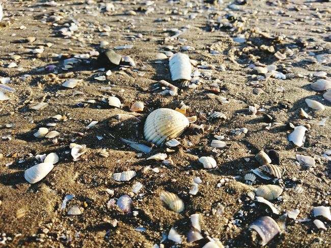 Nature Beach High Angle View Outdoors No People Seashell Day Pebble Beauty In Nature Close-up Beach Walk Beach Photography Sea Shore Sea Shells Wirral Leasowe