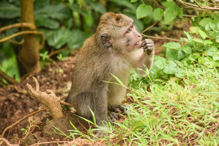 Monkey sitting in a sunlight