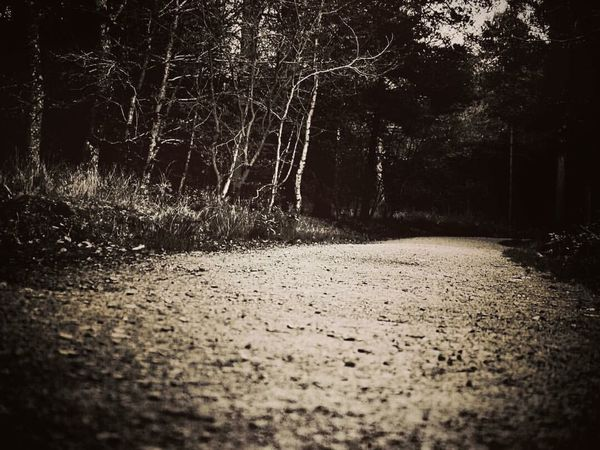 The winding path through the spooky forest. Tree No People Forest Nature Day Outdoors Nature Beauty In Nature Beauty EyeEmNewHere First Eyeem Photo Eyeemphotography EyeEmBestPics EyeEm Best Shots EyeEm Gallery Nature Photography Forest Photography Forest Path Forestwalk Forest Trees Spooky Trees
