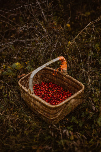 High angle view of strawberries in basket on field