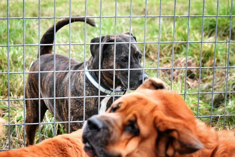 High Angle View Of Dogs By Fence