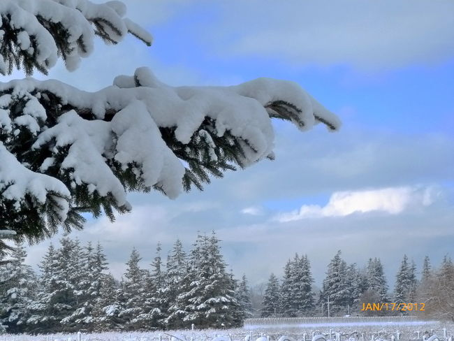 At Home Winter Snow #landscape #nature #photography
