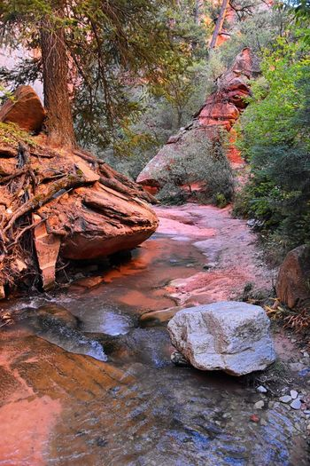 Kanarraville Falls, views from along the hiking trail of falls, stream, river, sandstone cliff formations Waterfall in Kanarra Creek Canyon by Zion National Park, Utah, USA. Kanarraville Falls Kanarra Hiking Red Rock Sediment Erosion Slot Canyon Tree Sandstone Kolob Canyons Zion National Park Zion Sand Falls Water Stream River Fall Summer Desert Mountain