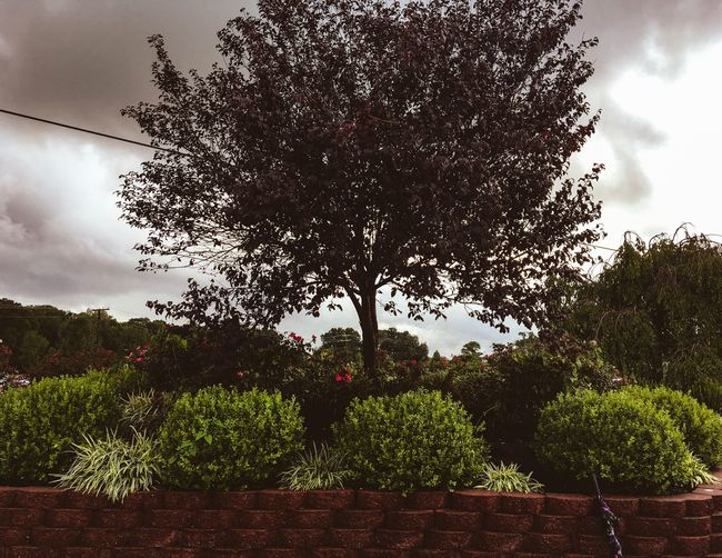Tree Growth Sky