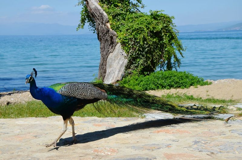 Side view of a bird on footpath against sea