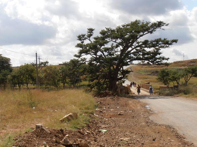 African scene. Tree Nature Cloud - Sky Kwazulunatal Sky Landscape South Africa African Beauty