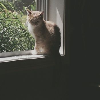 Socksygirl Cats Catlady Catsofinstagram catstagram ilovemycat petstagram petsofinstagram ilovemypet