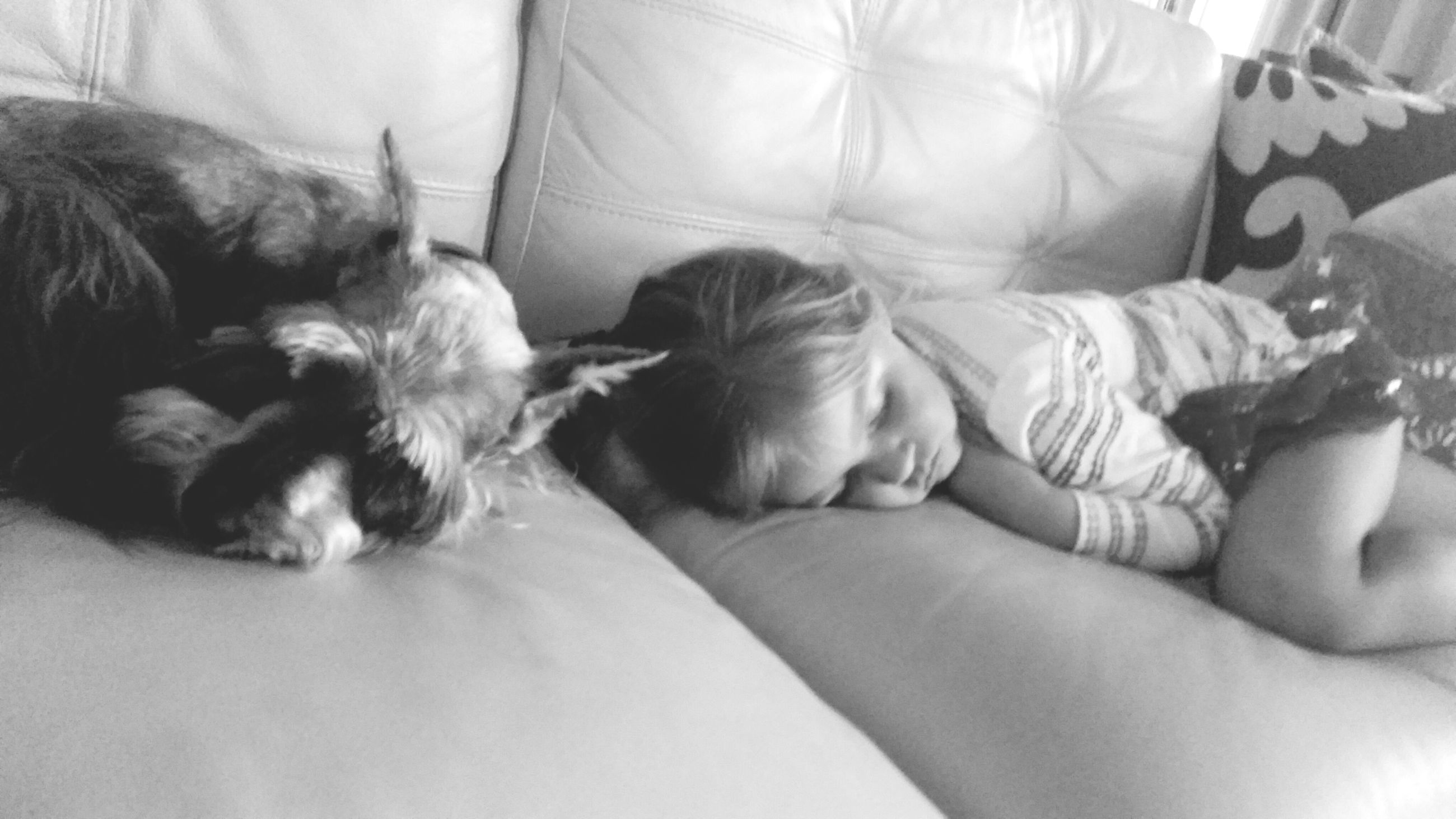 indoors, pets, domestic animals, dog, relaxation, bed, mammal, animal themes, lying down, sleeping, one animal, resting, home interior, cute, childhood, innocence, togetherness, bonding