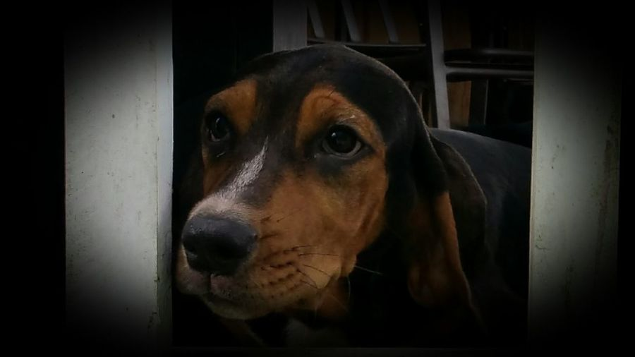Hounddog Puppy HoundDog Dog Dog Love Puppy Love Puppy Simply Beautiful Check This Out Expression Cuddly This Week On Eyeem Natural Pattern Animal Pattern Simple Photography Simple Beauty Friend Buddy Tranquility Peaceful Natural Beauty Simple Things In Life