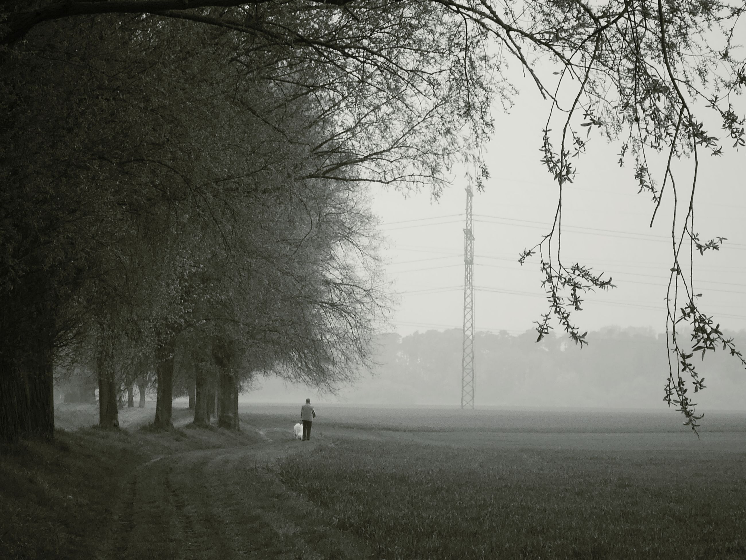 tree, field, fog, landscape, bare tree, tranquility, tranquil scene, grass, foggy, nature, growth, branch, scenics, beauty in nature, weather, silhouette, sky, grassy