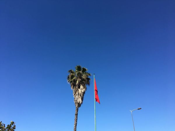 Summer is coming Rabat Rabat Morocco Morocco Sky Blue Clear Sky Low Angle View Flag Copy Space Nature Plant Outdoors Tree Day Growth No People
