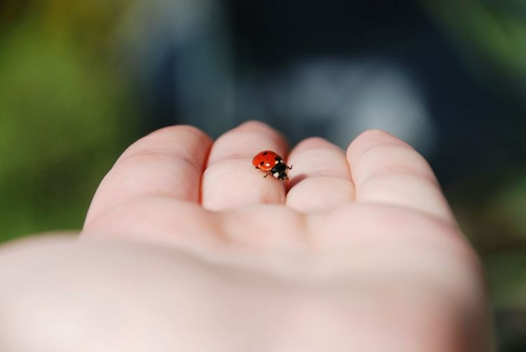Lucky day Macro Insect Ladybug Red Focus Nature Green Sun Lucky Human Body Part Human Hand Hand One Person Body Part Animal Wildlife Close-up Selective Focus One Animal Day Finger Animals In The Wild Human Finger Nature Land Outdoors Invertebrate Small Visual Creativity Focus On The Story