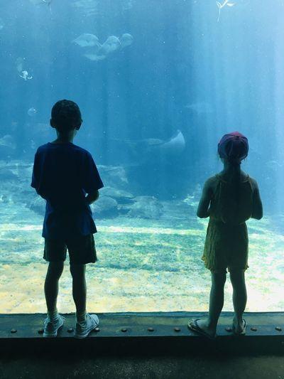 Full length rear view of fish at aquarium
