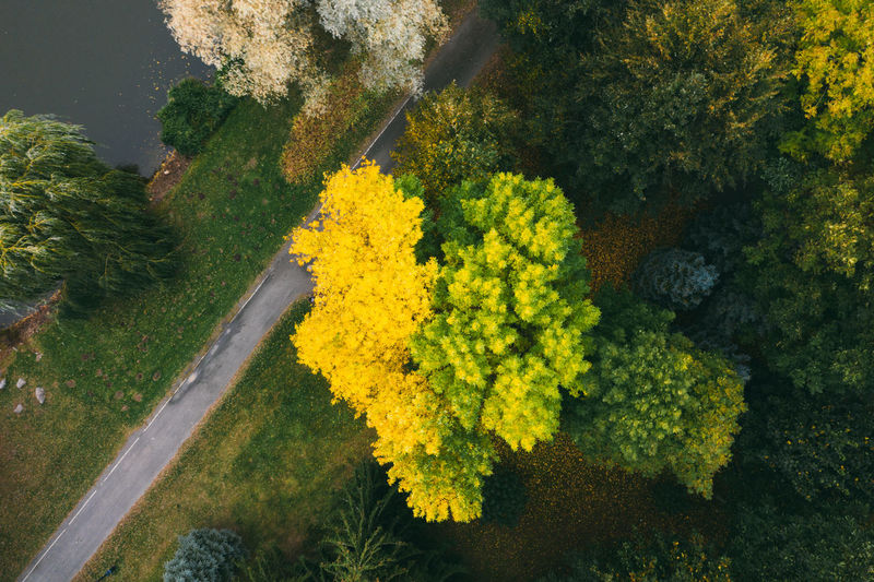 Colorful trees of autumn seen from a drone. trees planted in the shape of a heart.