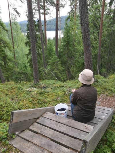 Break Leisure Activity Action Blueberry Finland Summer Relaxing Forest Non-urban Scene View From The Top Finland Von Wright Haminalahti My Year My View