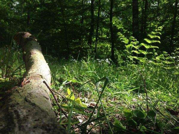 Nature Green Visiting Nature