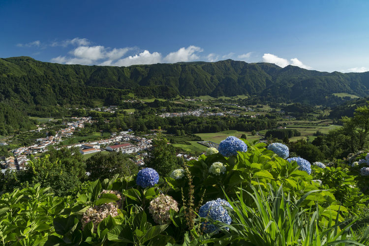 View to Furnas, Azores, Sao Miguel Azores Islands Azores, S. Miguel Beauty In Nature Cloud - Sky Day Environment Flower Flowering Plant Green Color Growth Landscape Mountain Mountain Range Nature No People Non-urban Scene Outdoors Plant Scenics - Nature Sky Tranquil Scene Tranquility Tree
