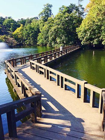 l love my city, Kichijoji, Tokyo. Walking through Inokashira Park is blissful. I Love My City Tokyo Kichijoji Inokashira Park Lovelovelove Bridge Pond From My Point Of View