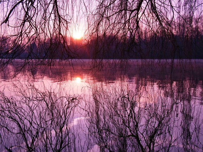 Good Morning Winter Bare Tree Reflection Tree Beauty In Nature Nature Lake Sunset Purple Outdoors Beauty Sky