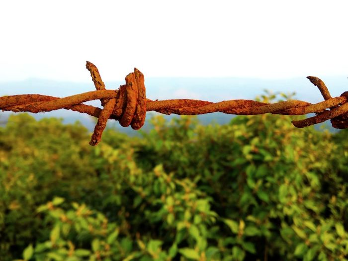 Rust Rusty Rust Fence Fences Iron Fence Iron Limit Plant Forest Fence Sky Fenced Fence Photography Close-up Barbed Wire