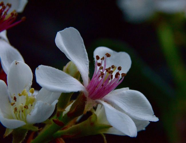 Macro Flower Petal Fragility Beauty In Nature Nature Flower Head White Color Growth Freshness Close-up Springtime No People Blossom Stamen Outdoors Day