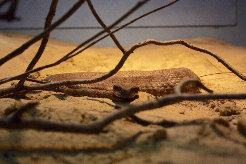 Snake Nature