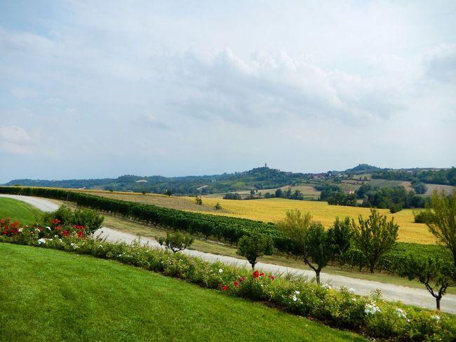 Tenuta Montemagno Agriturismo Vino Wine Piemonte Summer Nature Photography Superphotoapp Photography First Eyeem Photo