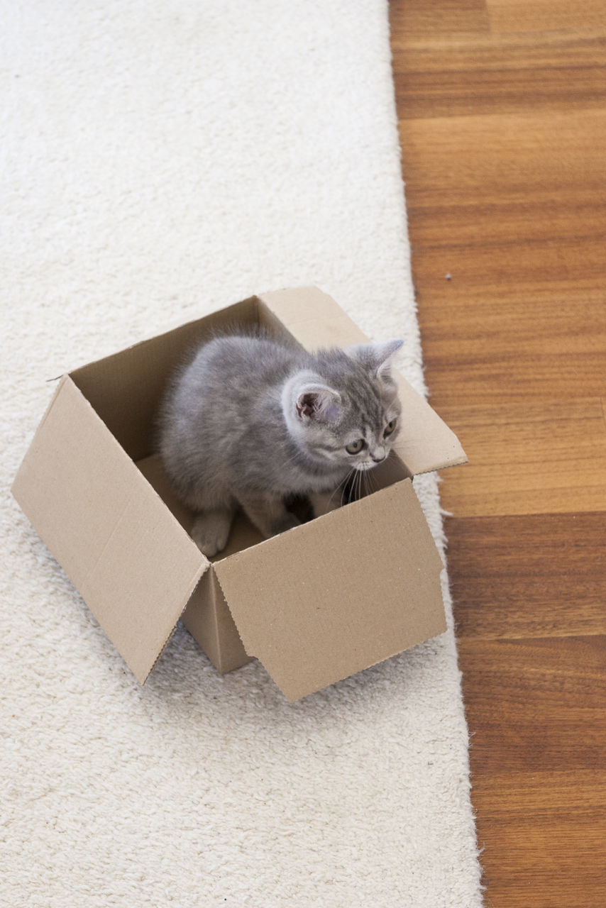 cardboard box, box - container, one animal, mammal, animal themes, pets, cardboard, domestic cat, indoors, domestic animals, no people, feline, day