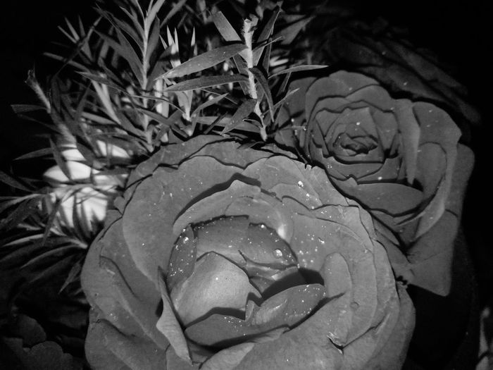 Rise 🌹 EyeEmNewHere Rose - Flower Night Nature Close-up Beauty In Nature Outdoors