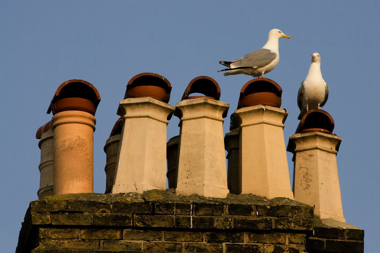Low Angle View Of Seagulls Perching On Building Against Clear Sky.