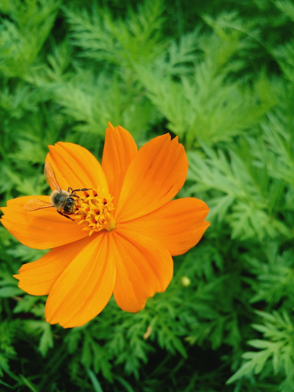 flower, insect, petal, nature, growth, animal themes, fragility, one animal, freshness, animals in the wild, beauty in nature, plant, bee, outdoors, flower head, no people, focus on foreground, animal wildlife, blooming, day, close-up, pollination, buzzing