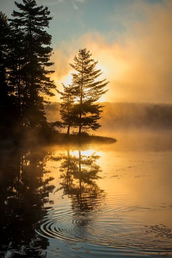 Algonguin Park Sunrise. Nature Beauty In Nature Water Lake Landscape Reflection Morning Sky Tree Scenics Cloud - Sky Environment Canada Outdoors No People Tranquility Sunlight Ontario, Canada Algonquinprovincialpark Algonquin Park Algonquinpark