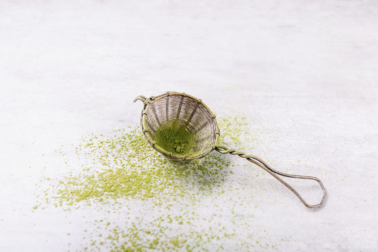 High angle view of shell on white background
