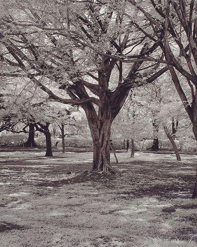 Incredibleindia Instagram Rsa_nature Rsa_light Rsa_trees Rsa_mystery _oye _soi Bangalore CubbonPark