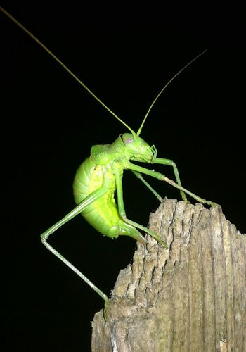 Life on Earth.... Bugs Life In Pose For The Shooting Green Night Black Looking At Camera Nature Wood Animal Themes Insect
