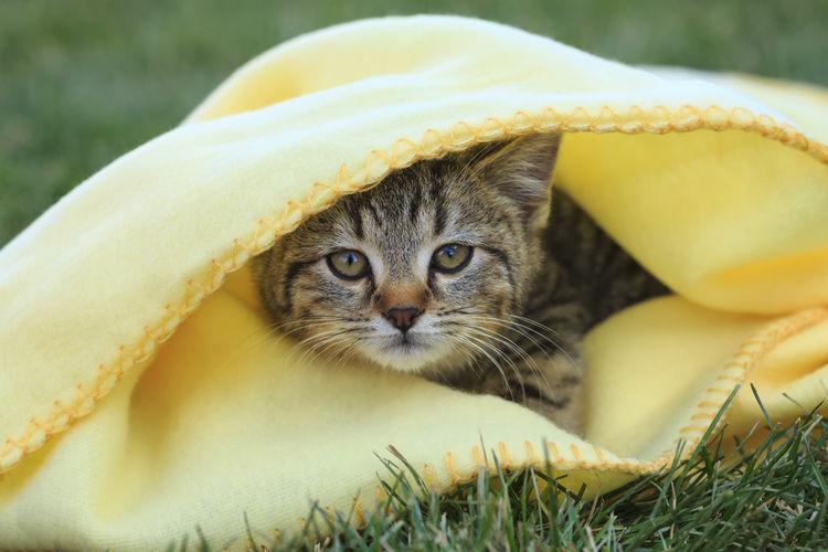 Cute kitten TabbyCat Kittens Cats Of EyeEm EyeEm Best Shots Canon 5d Mark Lll Animals Canon Furry Friends Furrybabies Kittens Of Eyeem Babies Cutest Kittens Peekaboo Snuggles