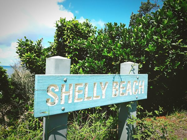 Shelly beach what a place ! Taking Photos Shelly Beach Beach Hot Coastalwalk Australia Eastcoat Travel Photography Love Traveling