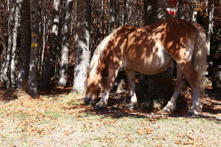 Beauty In Nature Mountain Autumn One Animal Animal Themes Mammal No People Animal Wildlife Outdoors Nature Day Ferriere Italy Horse Signal Sentier CAI